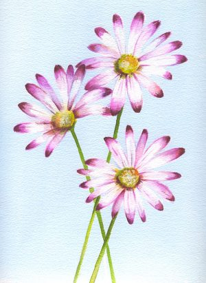 Large Daisies