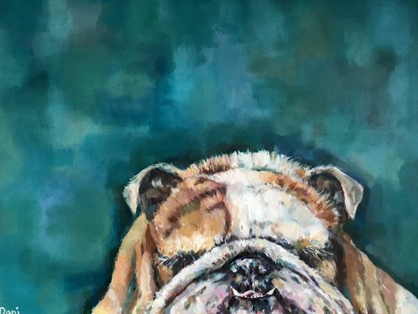 Mr Bulldog